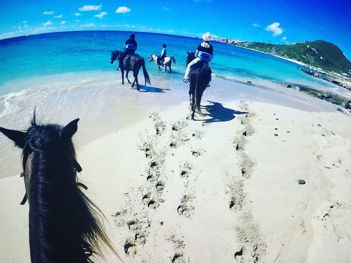 Horseback riding in Sint Maarten Sint Maarten Horse Riding Blue Water Beautiful Adventure