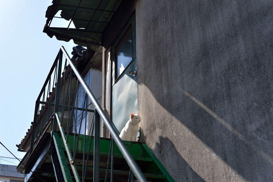 立石ノラ猫 Cat Cat♡ Animal Animal Photography Cute Showcase March EyeEm Best Shots EyeEm Best Edits From My Point Of View Snapshot Snapshots Of Life Nikon Nikonphotography Singlefocus Sigma50mm1.4Art in Japan , Tokyo
