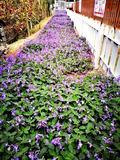 Growth Flower Day Outdoors Nature Plant Abundance High Angle View No People Beauty In Nature Freshness Architecture Fragility Plant Nursery Flower Head