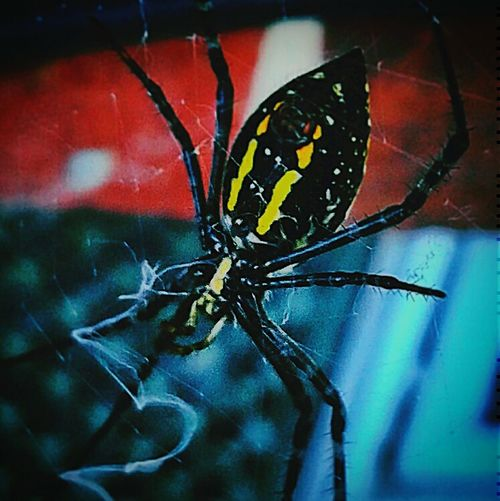 Capture The Moment Arachnophobia Spiderweb Webdesign Spiderworld Nature Photography Outdoors❤ Outside_my_window Beautiful Nature Environmental Conservation Nature_collection Macro Photography Artistic Expression Landscape #Nature #photography Photooftheday Pattern, Texture, Shape And Form Natural Beauty Designing Designs Wildlife & Nature