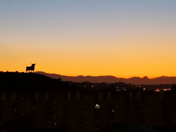 Bull and sunrise City Cityscape Mountain Sunset Silhouette Sky Animal Themes Landscape Architecture