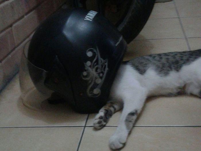Cat Sleeping FUNNY ANIMALS
