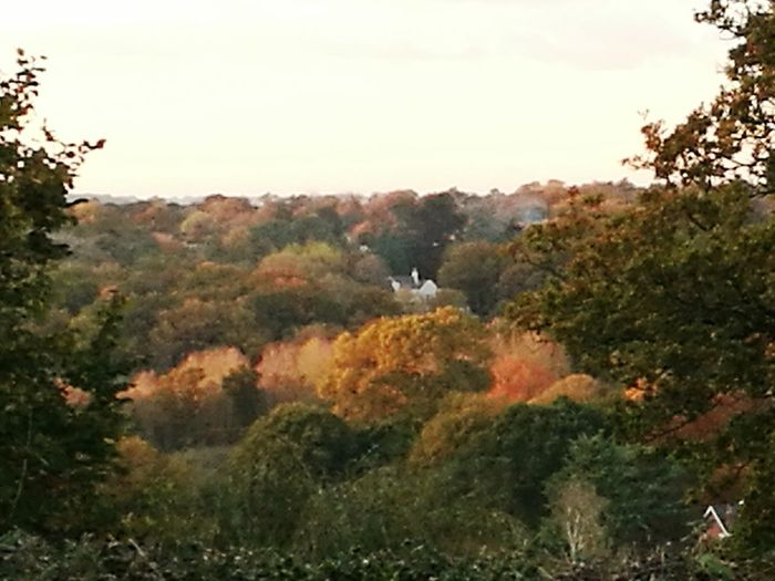 Autumn happening. View from the bothy. Nature Tree Forest