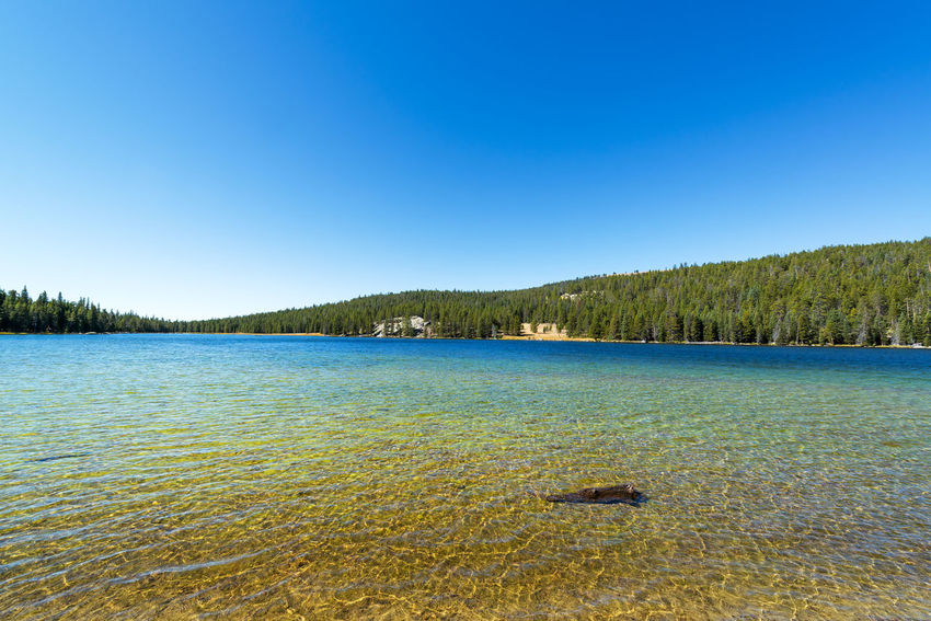 West Tensleep Lake view in Wyoming Beauty In Nature BigHorn Bighorn Mountain Range Bighorn Mountains Buffalo Clear Sky Day Forest Lake Landscape National Forest Nature No People Outdoors Scenics Sky Tensleep Tourism Travel Travel Destinations Tree USA Water West Tensleep Lake Wyoming