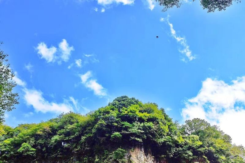 TAKACHIHO JAPAN Japan Takachiho Flying Tree Sky Low Angle View Cloud - Sky Mid-air Day Nature No People Blue Outdoors Beauty In Nature