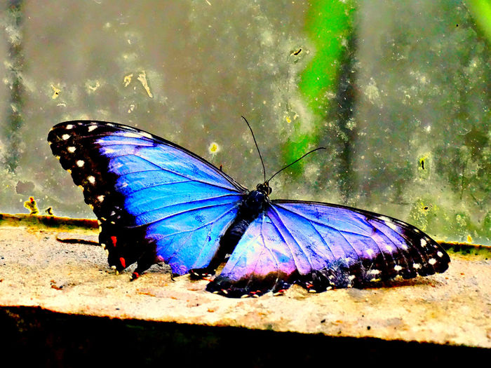 Animal Themes Animal Wing Butterfly - Insect Death Death Of Beauty Fragility Insect Multi Colored Wildlife