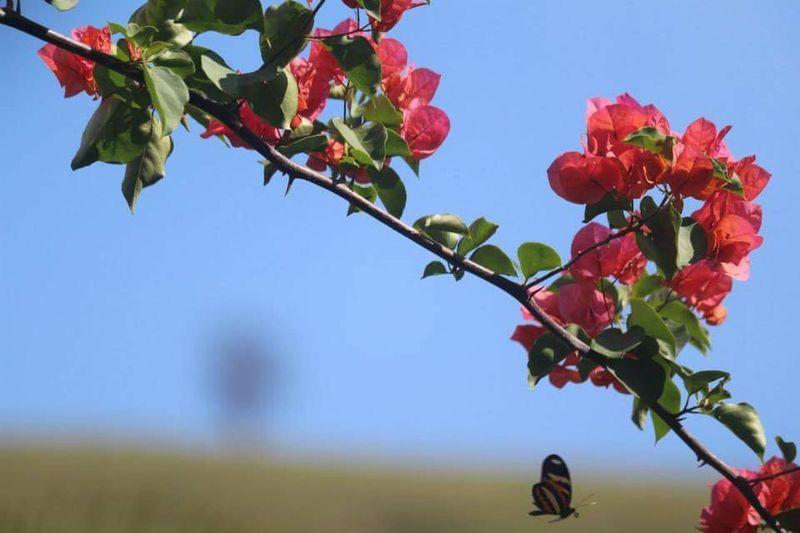 Maximum Closeness DayNature Insect Animals In The Wild Beauty In Nature Close-up Nasgeraiseassim Itajubá Minas