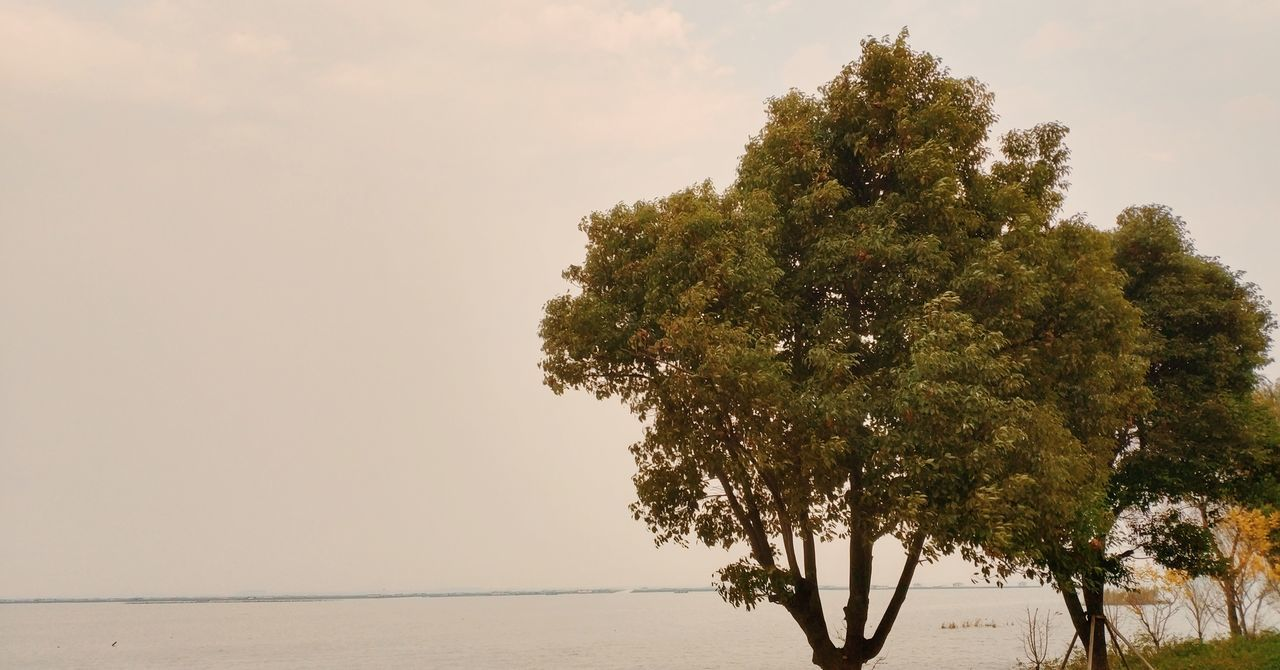 tree, nature, beauty in nature, tranquility, growth, scenics, no people, sky, outdoors, water, day