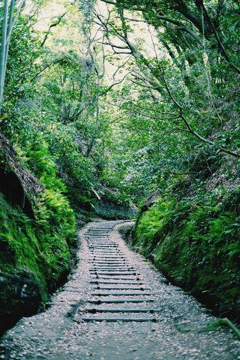昭和の森 Tranquility Tree Green Color Pathway Nature Outdoors Xpro1 Fujifilm