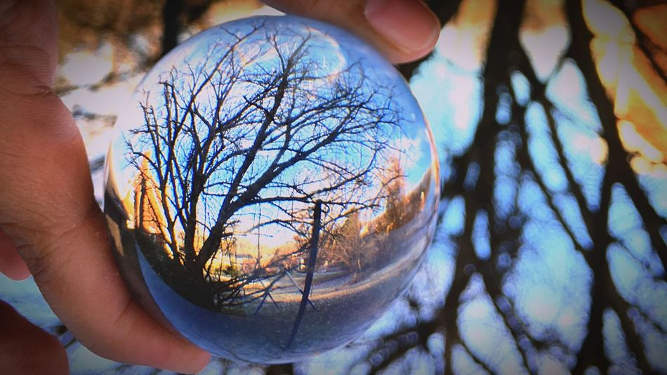 Human Body Part Human Hand Human Finger One Person Holding Close-up Bare Tree