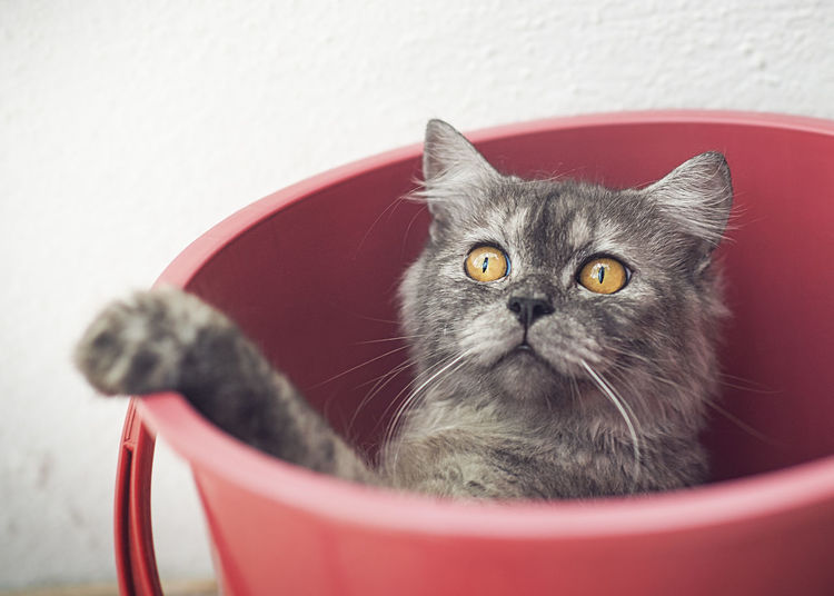 Close-up of cat in a bucket