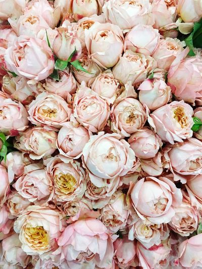 Backgrounds Full Frame Freshness Large Group Of Objects No People Close-up Market Nature Roses Flower Pale Pink Pale Pink Flower Pink Roses Tenderness