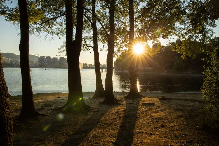 Sunlight streaming through trees on lake during sunset