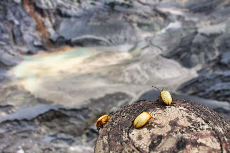 Mt. Tangkuban Parahu, Jawa barat, Indonesia. Solid Animal Wildlife Rock Rock - Object Animals In The Wild Animal Animal Themes Day Nature Close-up No People One Animal Land Focus On Foreground Outdoors Beauty In Nature Selective Focus Shell Animal Shell Invertebrate Marine EyeEmNewHere EyeEm Best Shots Nature Beauty In Nature