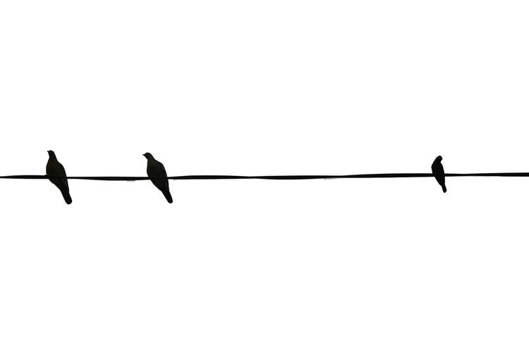 Bird Black And