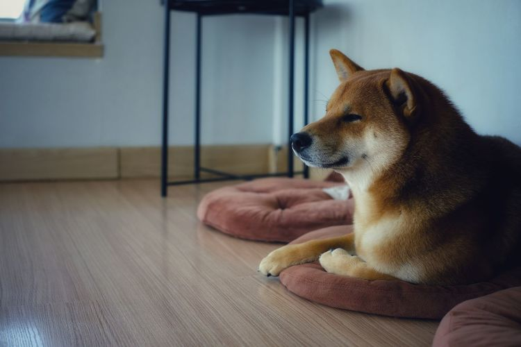 Dog looking away while sitting on table at home