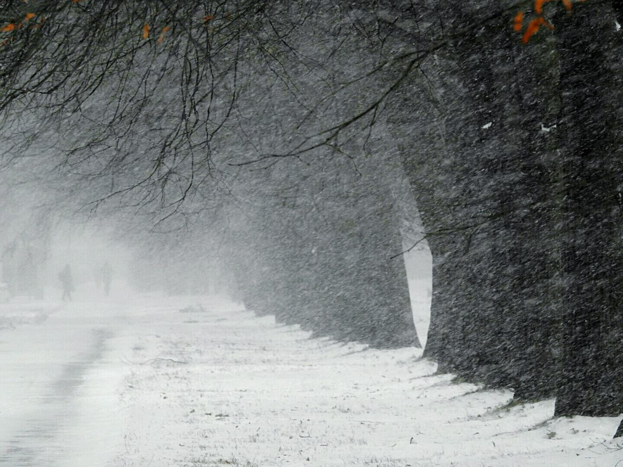cold temperature, winter, snow, the way forward, nature, tree, weather, tranquility, outdoors, no people, snowing, beauty in nature, landscape, day, road, scenics, bare tree
