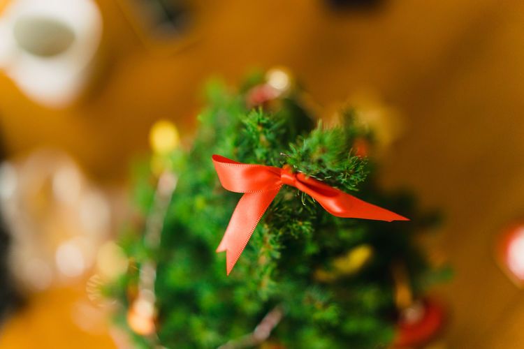 Christmas Decoration Christmas Decoration Christmas Festive Decoration Plant Close-up Selective Focus Growth No People Red Flower Focus On Foreground Green Color Nature Freshness Beauty In Nature Celebration Flowering Plant Food Food And Drink Leaf