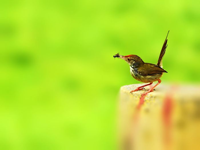 Close-up of bird eating insect