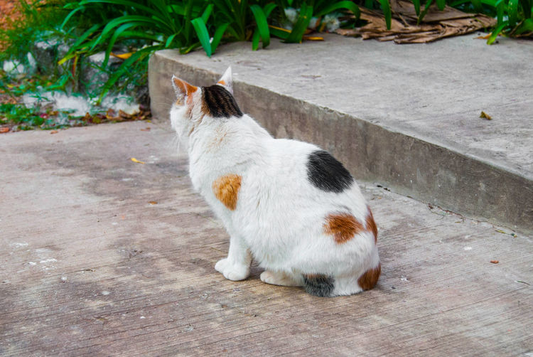 A stray calico cat sitting in a park. Animal Animal Themes Calico Cat Cat Day Domestic Feline Homeless Looking Mammal Nature No People One Animal Outdoors Park Pets Relaxation Sitting Stray Stray Cat White Color