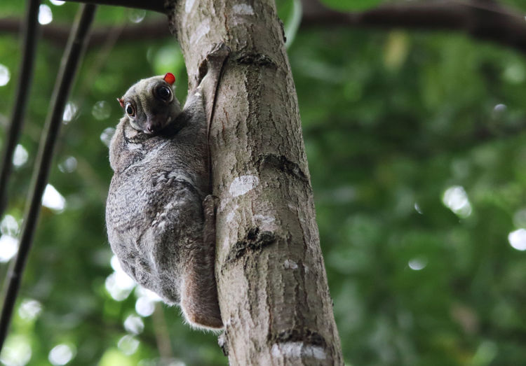 Close-up of squirrel perching on tree