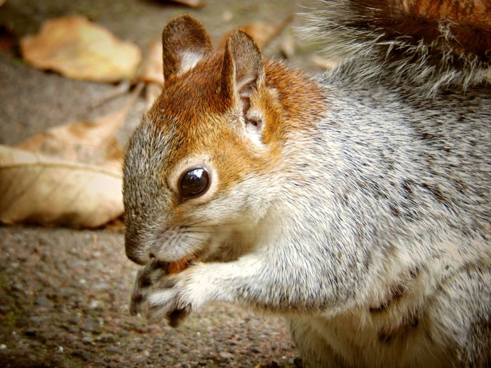 Squirrel Animal Wildlife Animals In The Wild Brown Close-up Day Mammal Nature One Animal
