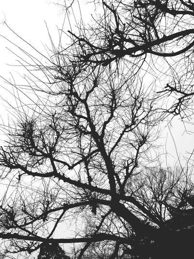 Holiday BabyBig Art Black & White Taking Photos Wood Sky Plants 🌱 Nature