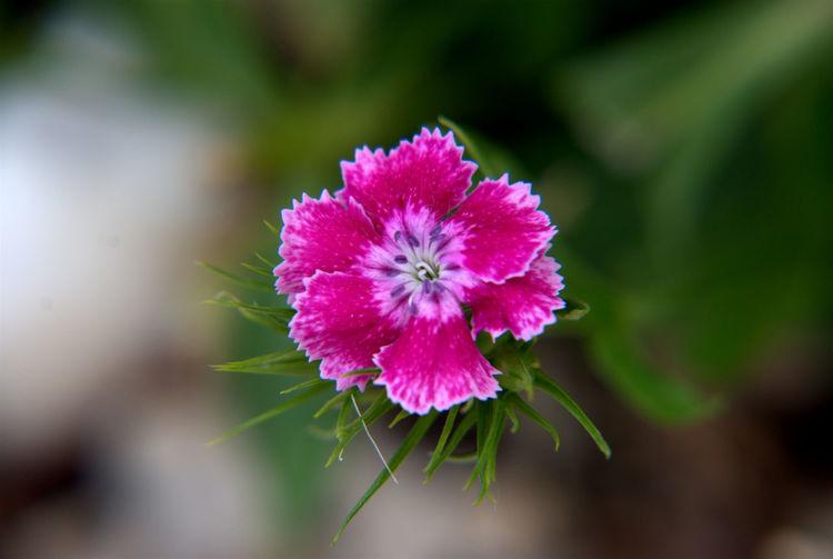 macro flower Flowers Flowers,Plants & Garden Macro Macro Beauty Macro Photography Macro_collection Macro_flower Macroclique Nikon Nikon60d Nikonphotography Fresh On Eyeem