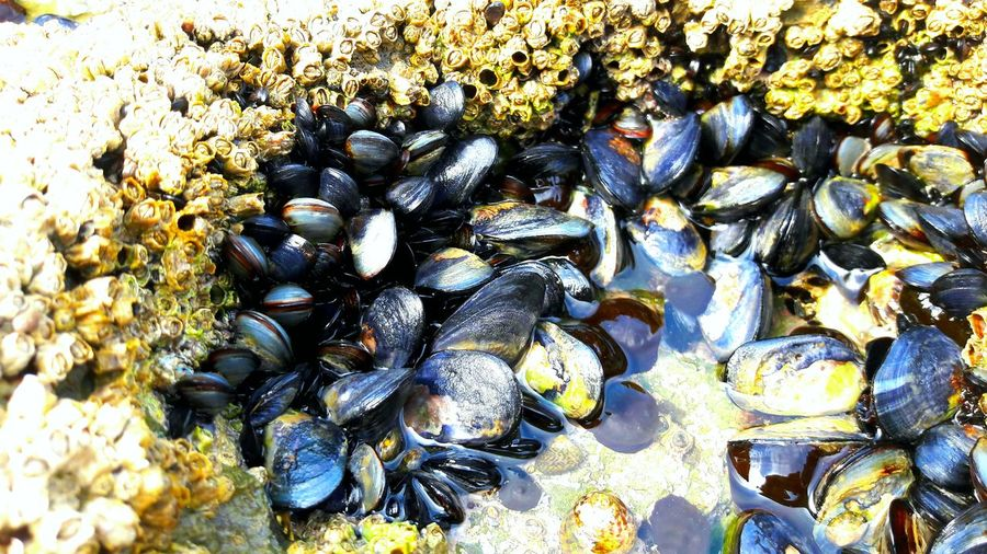 mussels Beachphotography Beach Life Coastline Landscape Waves, Ocean, Nature Sand & Sea Beach Sea SPAIN Full Frame Backgrounds Close-up Pebble Seashell Stone Animal Shell Mussel Mollusk Gastropod Stone - Object Seaweed Detail Pebble Beach Ground Shell Stream Tortoise Shell Rock Hermit Crab Shore Oyster  Clam