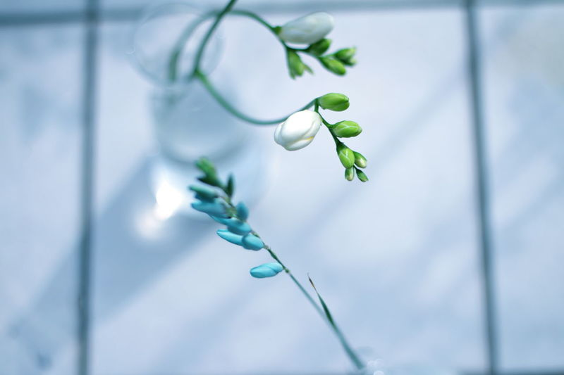 A long with the spring of wind Blomster Beauty In Nature Blommor Blue Branch Close-up Day Fiore Fleur Flores Flower Flowers Fragility Freshness Green Color Growth Ixia Leaf Nature No People Outdoors Plant