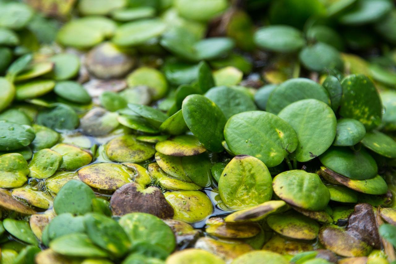 Full Frame Shot Of Plants Growing In Pond