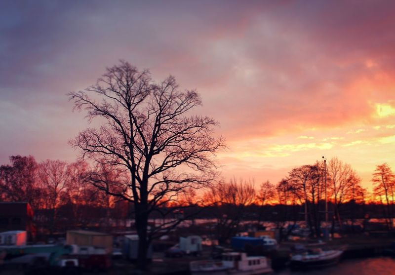 Berlin Berlinsky Skyoverberlin Sunrise Violetsky Beauty In Nature Landscape Mornings Nature Outdoors Canonshot Canon Canonphotography Nature Tree Landscape Nature Naturelovers Capture The Moment Dramatic Sky Colorful