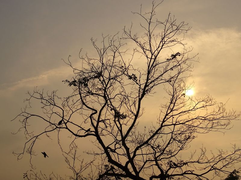 Bird Flying Flock Of Birds Nature Sky Large Group Of Animals Beauty In Nature Animals In The Wild Sunrises Outdoors Deadtree Flyaway Multi Colored No People Animal Themes Day Freshness