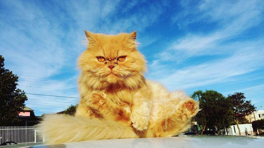 Snow ❄ Cat Cats Cats Of EyeEm