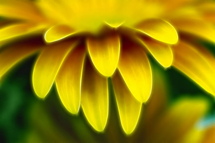 Fractal Flower Abstract Backgrounds Beauty In Nature Close-up Flower Flower Head Flowering Plant Fractal Fragility Freshness Growth Inflorescence Manipulation Nature No People Petal Plant Selective Focus Vulnerability  Yellow