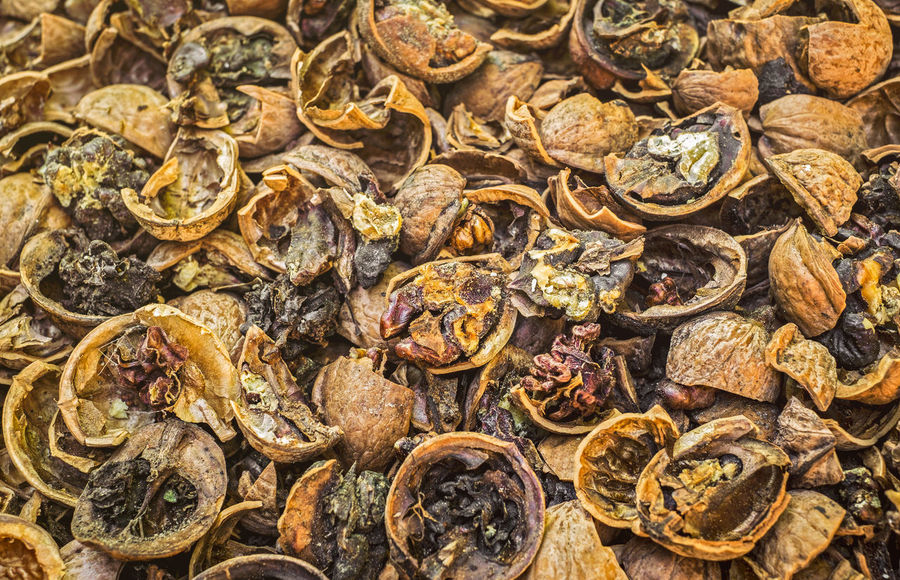 Cracked nuts infected with mold Bad Condition Mold Nuts Backgrounds Bad Close-up Corupted Cracked Day Decayed Defaced Full Frame Gold Colored Infected Mildew Mold Food Mold Mould Mouldy Nature No People Nuts And Seeds Nuts On The Ground Nutshell Outdoors Putrid Rotten