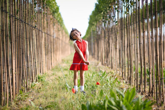 Little girl walking in nature field wearing beautiful red dress Happiness Happy Happy People Nature Red Childhood Day Full Length Girl Grass Lifestyles Little Little Girl Looking At Camera One Person Outdoors Poplar Poppies  Portrait Real People Red Smiling Standing Tree