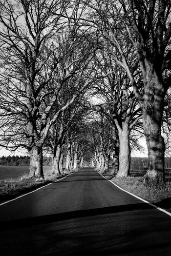 Tree Plant Road Transportation The Way Forward Direction Diminishing Perspective No People Bare Tree Treelined Nature Day vanishing point Car Motor Vehicle Tree Trunk Outdoors Trunk Vehicle Interior Growth Car Point Of View