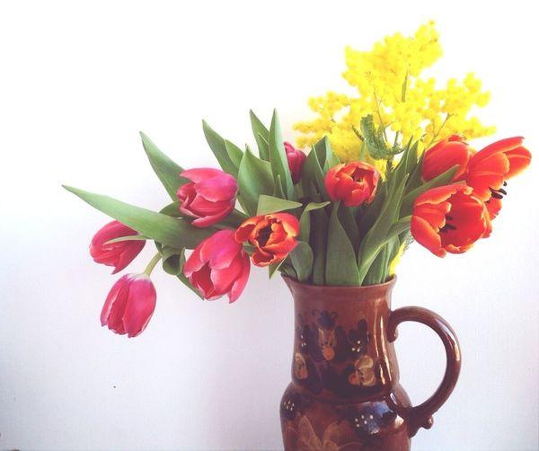 Flowers цветы цветы#красные#тюльпаны