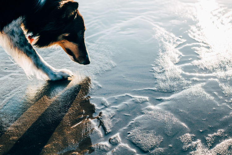 High angle view of dog in water