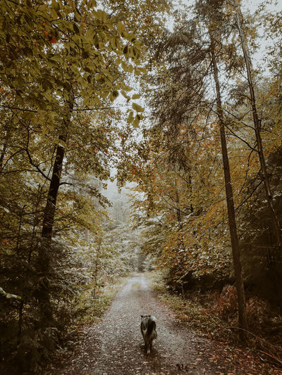 View of dog walking on road in forest