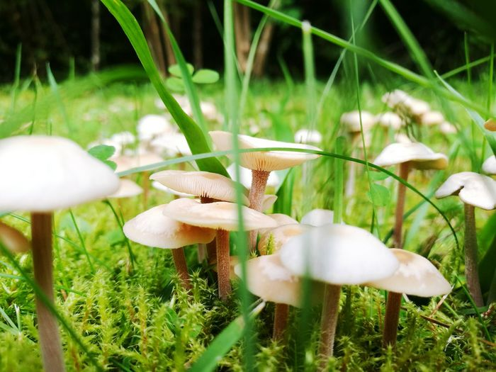 Ukmerge Home City Happy Time Lithuanian Girl Homeland Summer Lithuania Nature Nature_perfection Summer Views Mushrooms 🍄🍄 Grass Colors Maximum Closeness