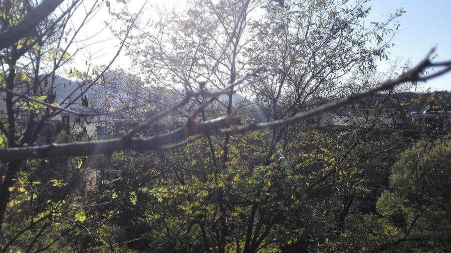 今天天气不错,挺风和日丽的;已经好久没有出来走走了。。。树叶子,也都快陆陆续续地掉光了 阳泉阳煤三矿From my huawei Ascend Mate7