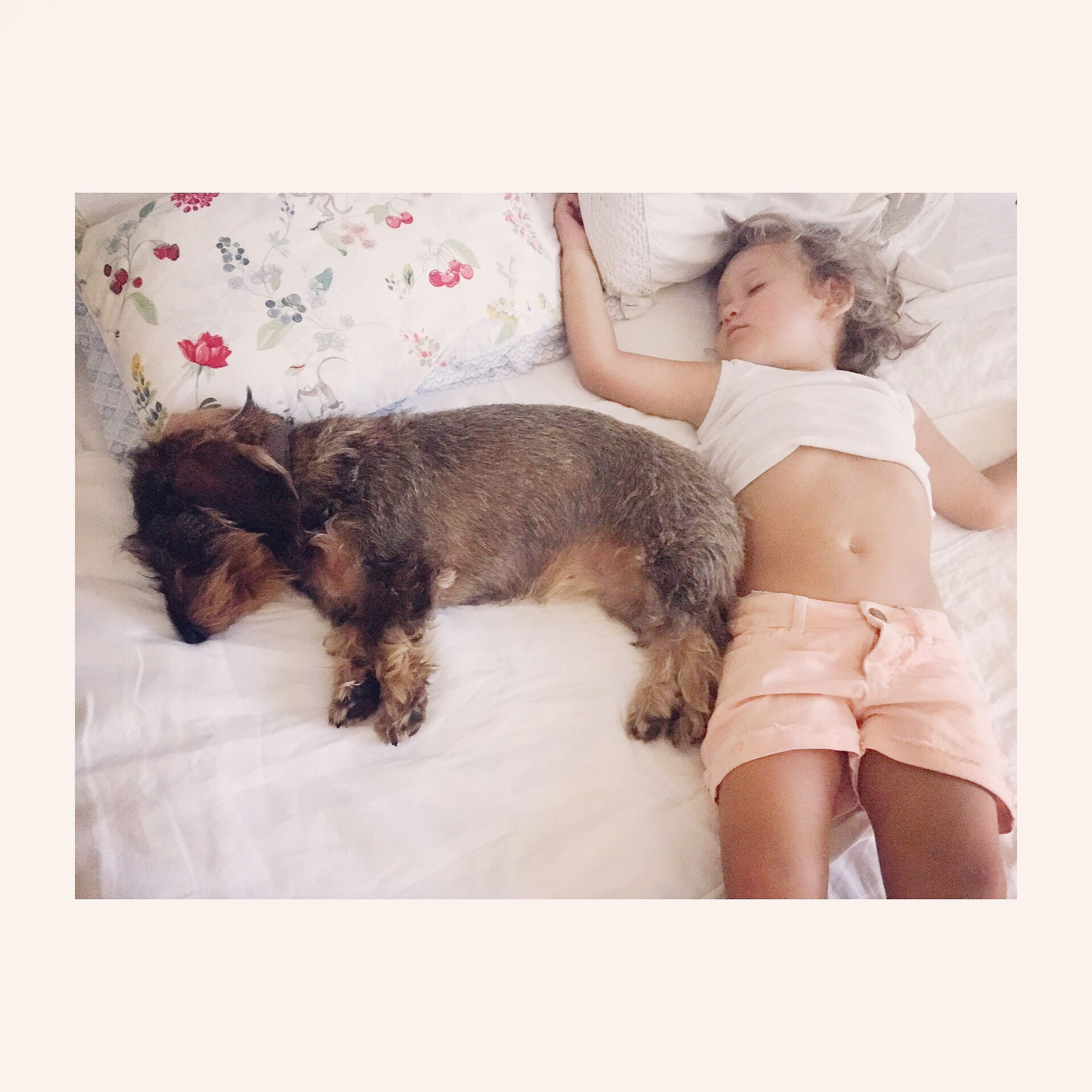 childhood, real people, pets, one animal, domestic animals, girls, bed, one person, animal themes, dog, full length, cute, indoors, elementary age, bonding, lifestyles, mammal, friendship, day