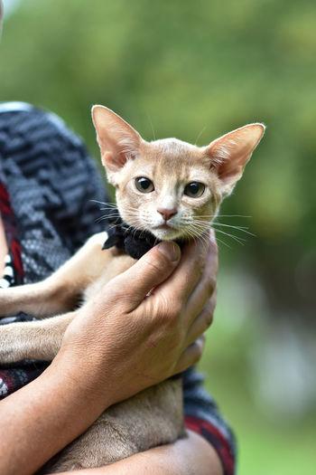 Portrait of hand holding cat