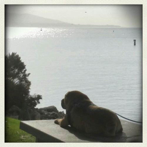 Its a ruff life....in Dana Point.