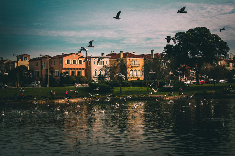Birds flying over lake and buildings