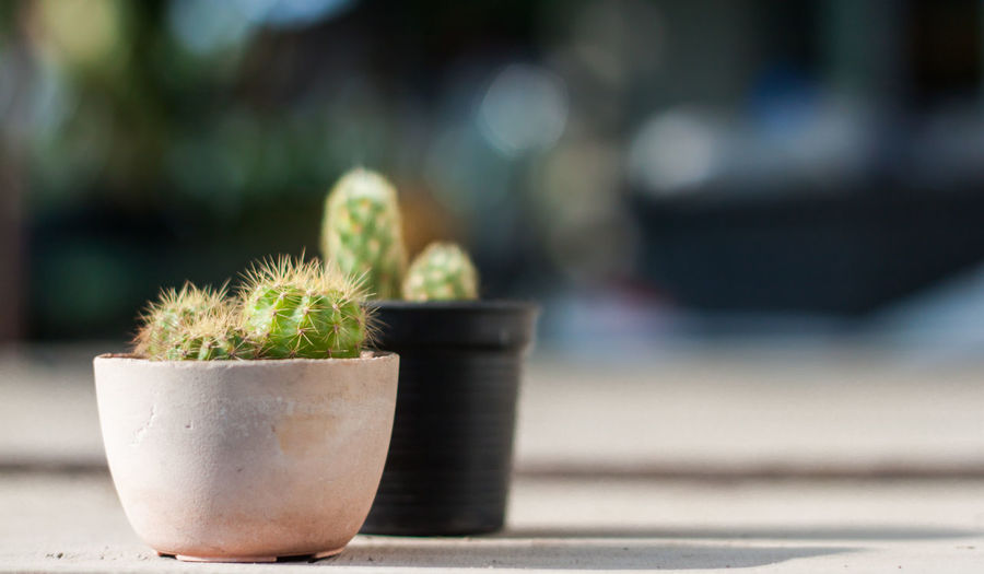 Arid Climate Beauty In Nature Botany Cactus Close-up Communication Day Flower Pot Focus On Foreground Freshness Green Color Growth Houseplant Nature No People Outdoors Plant Potted Plant Sharp Spiked Spiky Succulent Plant Thorn