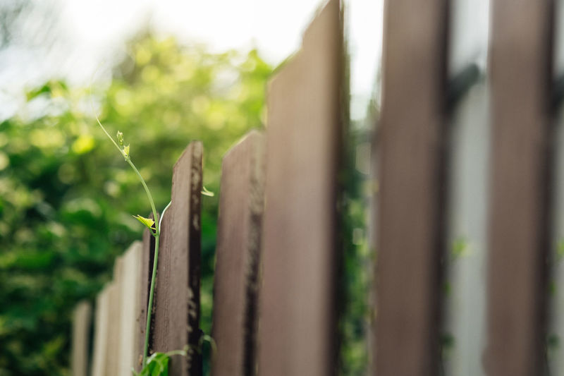 Lvy Gourd Coccinia Grandis Sunlight Agriculture Barrier Boundary Close-up Day Fence Focus On Foreground Gardening Green Color Growth In A Row Leaf Nature No People Outdoors Plant Plant Part Plantation Protection Rural Scene Selective Focus Summer