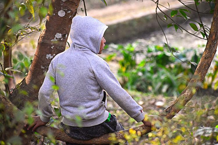 Rear view of boy sitting on branch